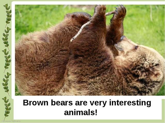 Brown bears are very interesting animals! FokinaLida.75@mail.ru