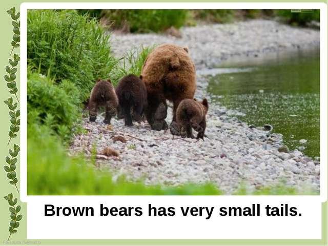 Brown bears has very small tails. FokinaLida.75@mail.ru