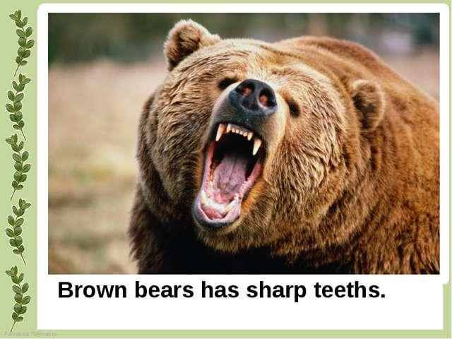 Brown bears has sharp teeths. FokinaLida.75@mail.ru
