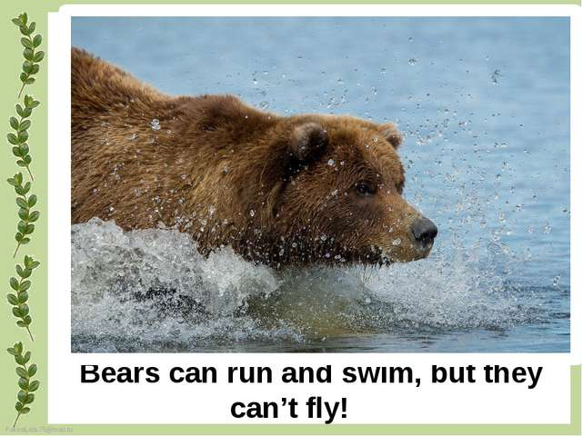 Bears can run and swim, but they can't fly! FokinaLida.75@mail.ru