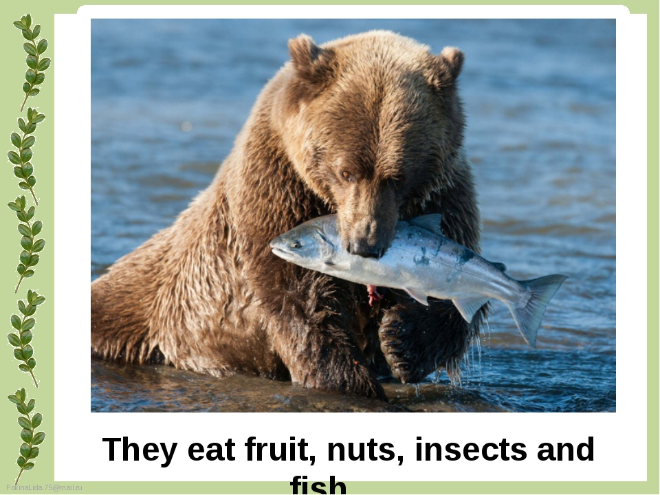 They eat fruit, nuts, insects and fish. FokinaLida.75@mail.ru