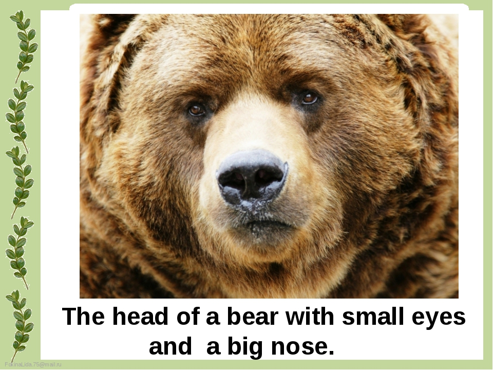The head of a bear with small eyes and a big nose. FokinaLida.75@mail.ru