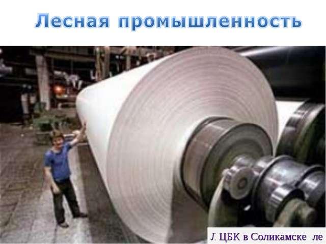 Лесозаготовки на Урале ЦБК в Соликамске
