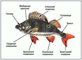 http://festival.1september.ru/articles/615317/img2.jpg
