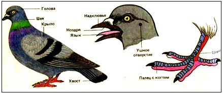http://festival.1september.ru/articles/615317/img5.jpg