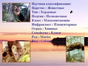 Научная классификация: Царство : Животные Тип : Хордовые Подтип : Позвоночные
