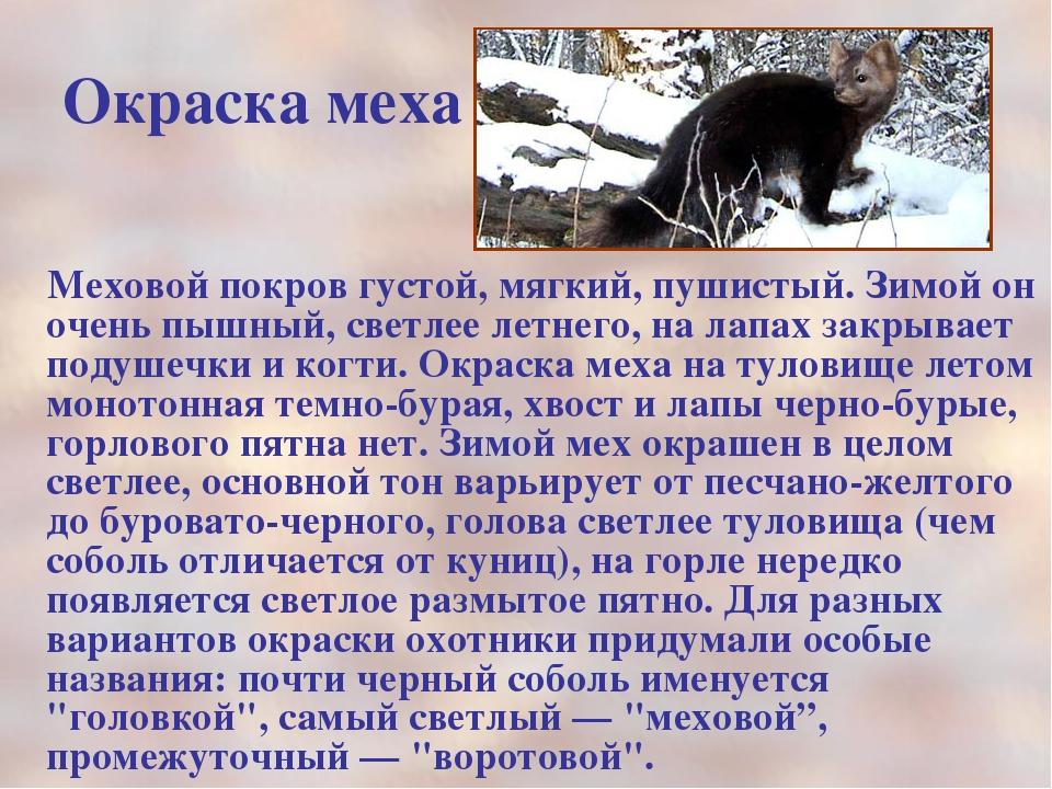 Окраска меха Меховой покров густой, мягкий, пушистый. Зимой он очень пышный,...