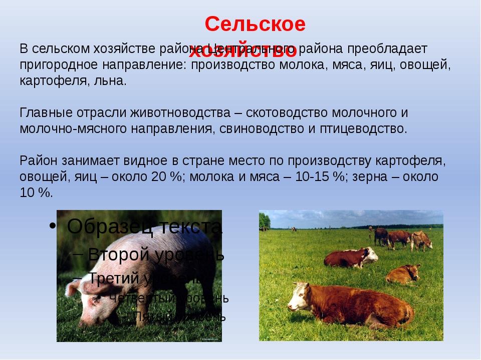 Сельское хозяйство В сельском хозяйстве района Центрального района преобладае...