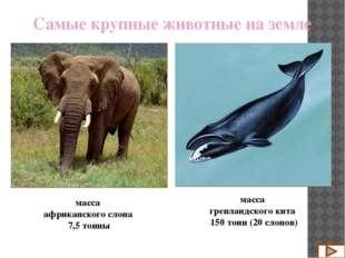 масса африканского слона 7,5 тонны Самые крупные животные на земле масса афри