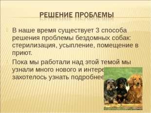 В наше время существует 3 способа решения проблемы бездомных собак: стерилиза