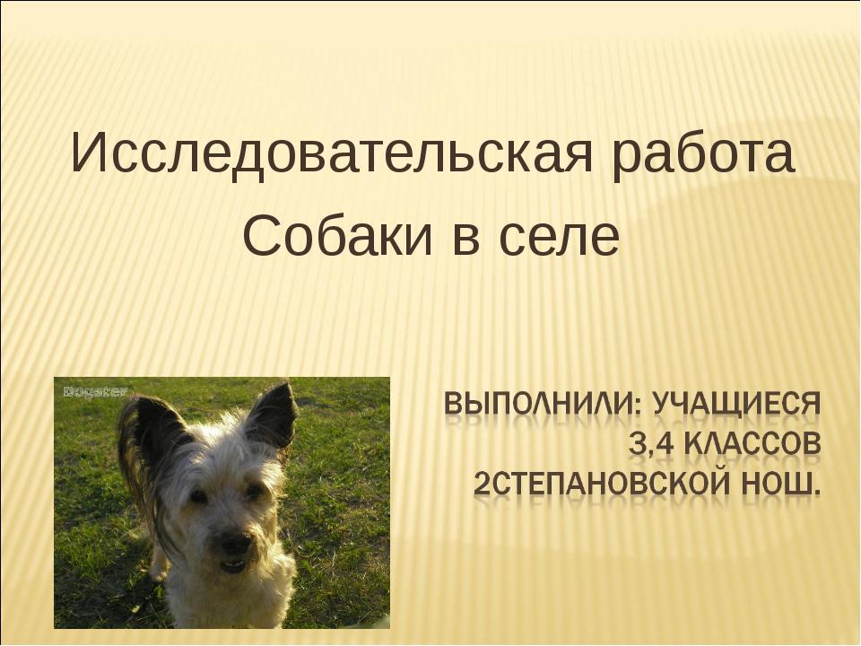 Исследовательская работа Собаки в селе