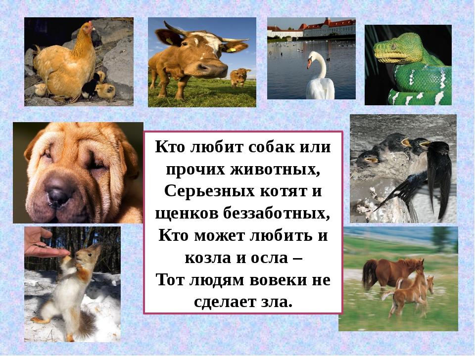 Кто любит собак или прочих животных, Серьезных котят и щенков беззаботных, Кт...