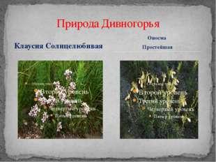 Клаусия Солнцелюбивая Природа Дивногорья Оносма Простейшая