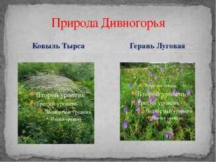 Ковыль Тырса Природа Дивногорья Герань Луговая
