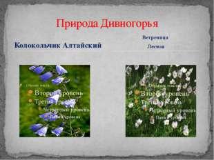 Колокольчик Алтайский Природа Дивногорья Ветреница Лесная