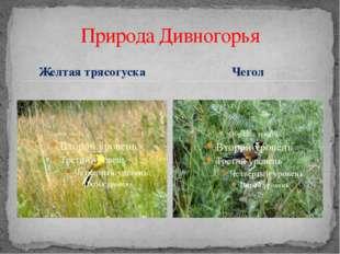 Желтая трясогуска Природа Дивногорья Чегол