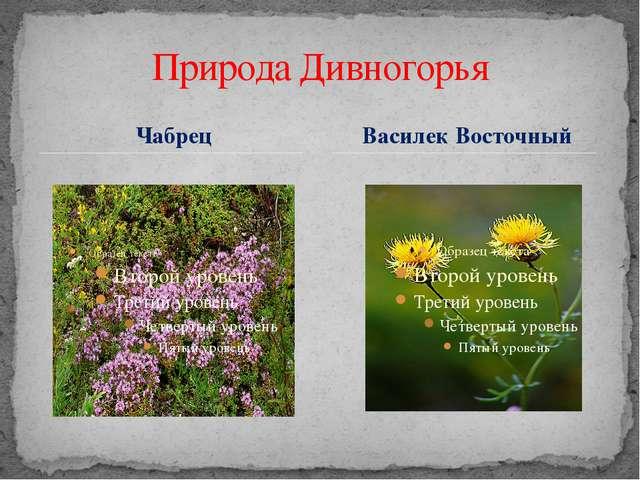 Чабрец Природа Дивногорья Василек Восточный