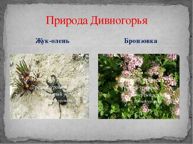 Жук-олень Природа Дивногорья Бронзовка