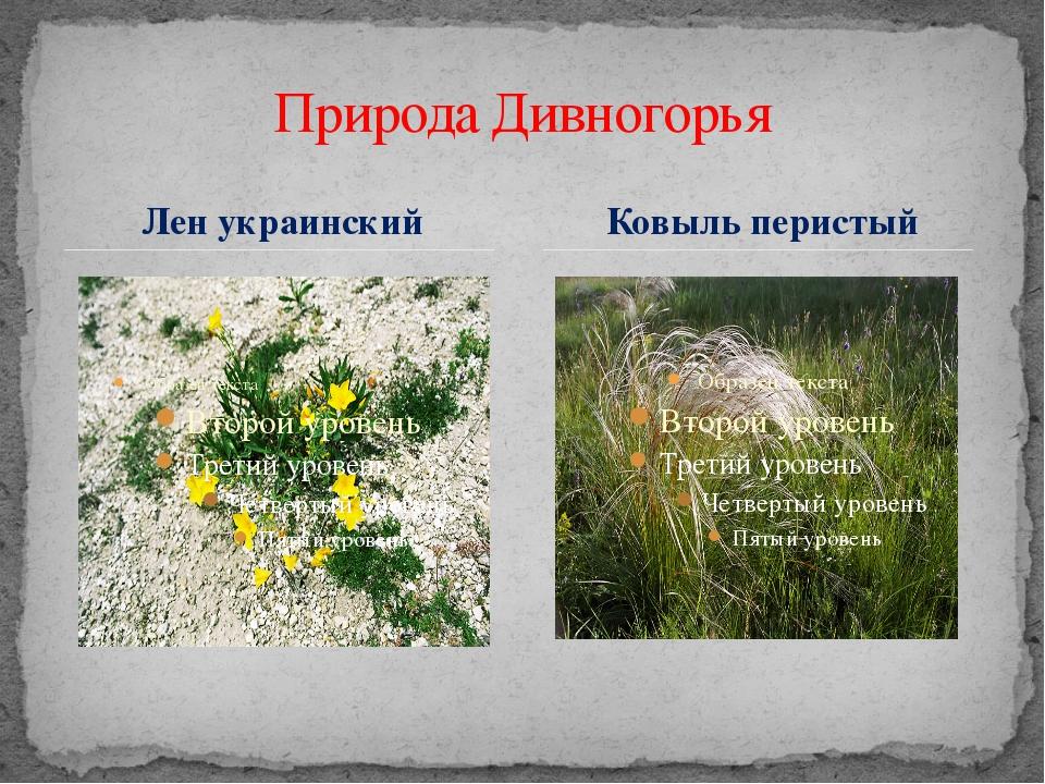 Лен украинский Природа Дивногорья Ковыль перистый