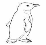 Penguins coloring pages Super Coloring - Part 2