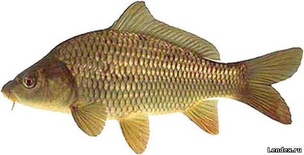 Рыбалка, магазин, ловить рыбу - Карп
