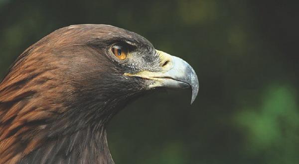 сокол птица Животные animal Природа Фото D8DIN1T