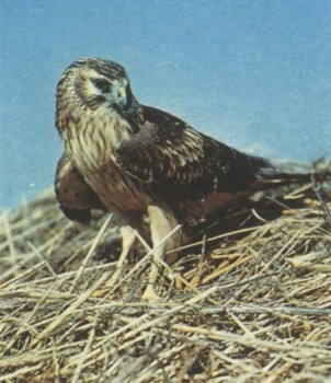 E:\Mir\Priroda\Data\Information\Birds\imgsm\162-1.jpg