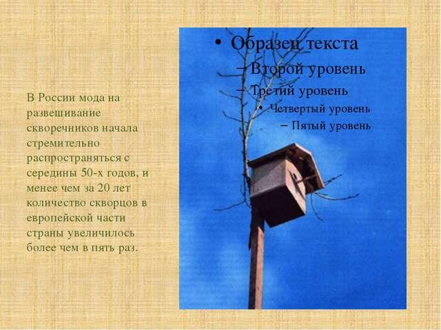В России мода на развешивание скворечников начала стремительно распространят...