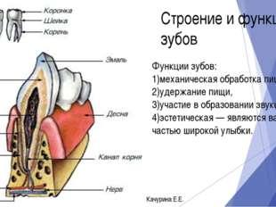 Функции зубов: 1)механическая обработка пищи, 2)удержание пищи, 3)участие в о