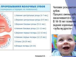 Человек рождается без зубов. Процесс смены зубов заканчивается к 12-14 годам.