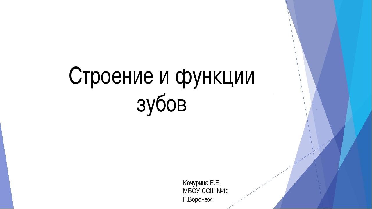 Строение и функции зубов Качурина Е.Е. МБОУ СОШ №40 Г.Воронеж