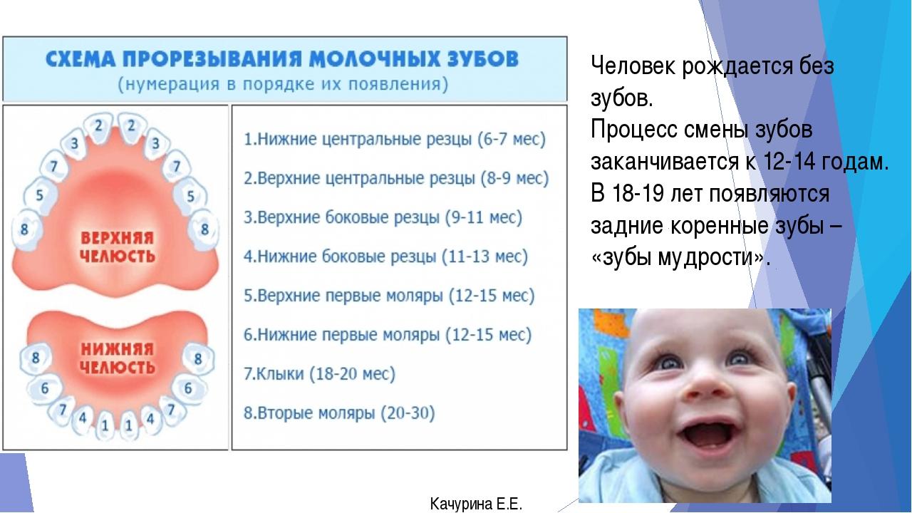 Человек рождается без зубов. Процесс смены зубов заканчивается к 12-14 годам....