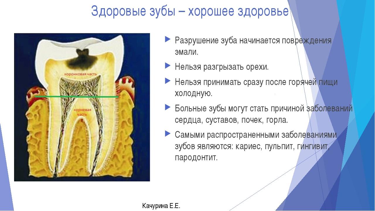 Почему происходит смена зубов биология 8 класс