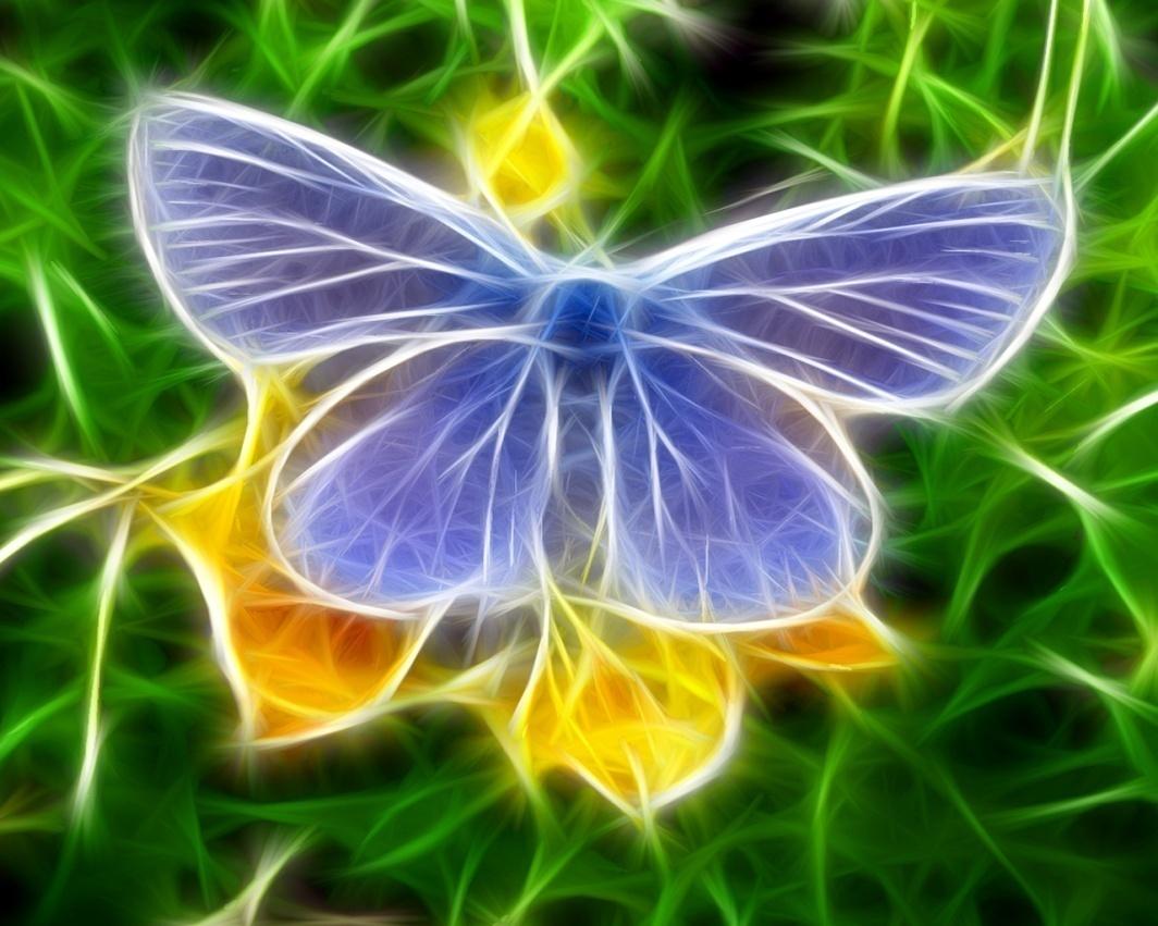 K:\КАРТИНКИ\МОИ КАРТИНКИ\бабочка.jpg