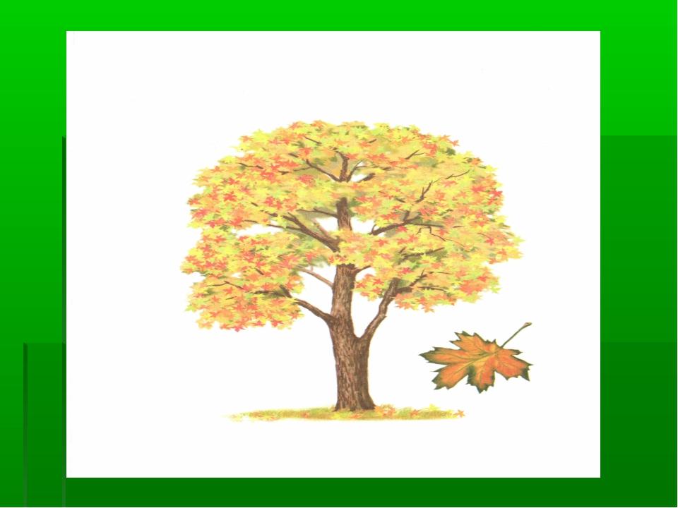 тем картинки деревьев для начальных классов зато каким
