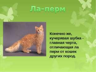 Конечно же, кучерявая шубка - главная черта, отличающая ла перм от кошек друг