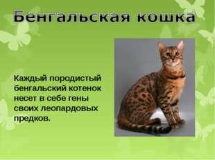 Каждый породистый бенгальский котенок несет в себе гены своих леопардовых пре
