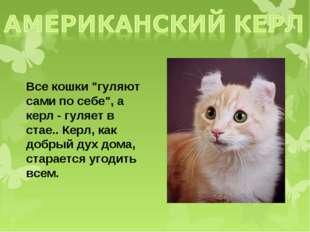 """Все кошки """"гуляют сами по себе"""", а керл - гуляет в стае.. Керл, как добрый ду"""