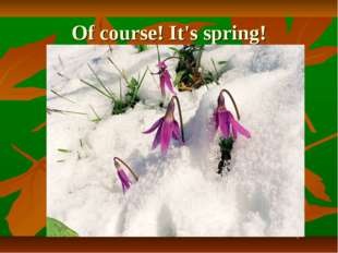 Of course! It's spring!