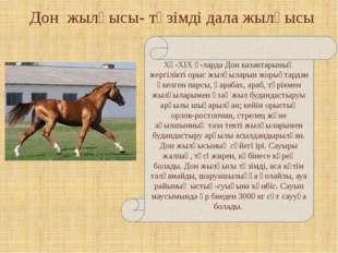 Дон жылқысы- төзімді дала жылқысы ХҮ-ХІХ ғ-ларда Дон казактарының жергілікті