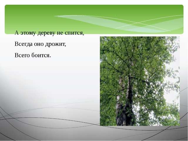 А этому дереву не спится, Всегда оно дрожит, Всего боится.