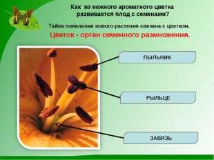 Как из нежного ароматного цветка развивается плод с семенами? Тайна появления