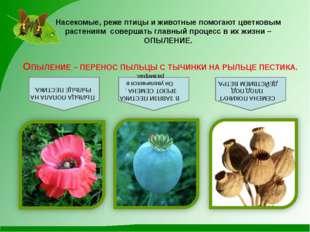 Насекомые, реже птицы и животные помогают цветковым растениям совершать главн