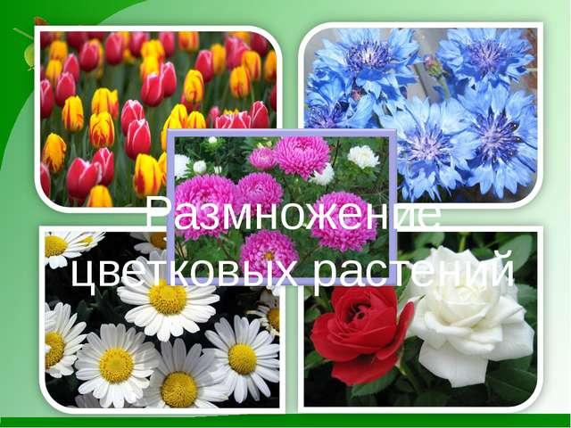 Размножение цветковых растений