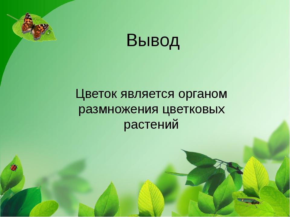 Вывод Цветок является органом размножения цветковых растений