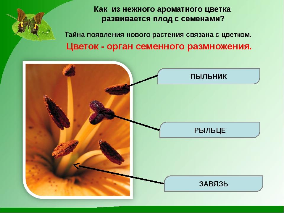 Как из нежного ароматного цветка развивается плод с семенами? Тайна появления...