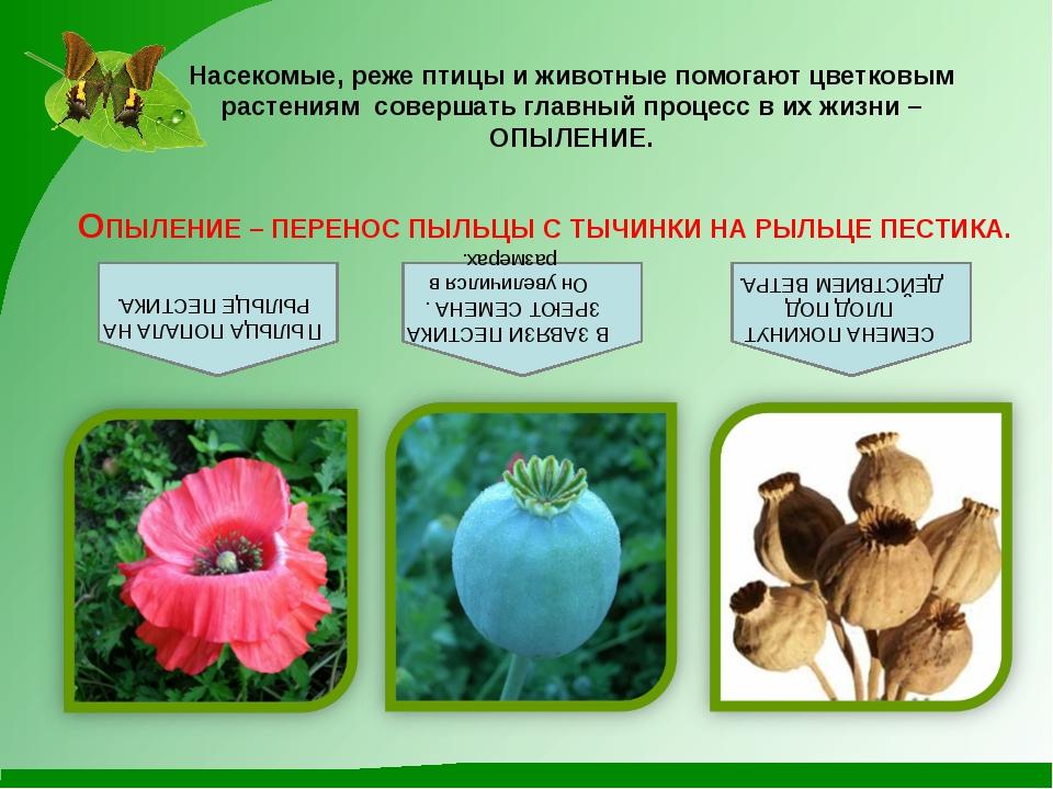 Насекомые, реже птицы и животные помогают цветковым растениям совершать главн...