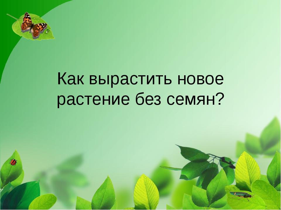 Как вырастить новое растение без семян?