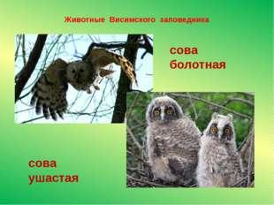 Животные Висимского заповедника сова ушастая сова болотная