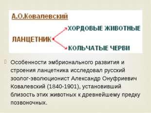 Особенности эмбрионального развития и строения ланцетника исследовал русский